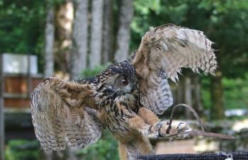 Parc animalier du Hérisson fauconnerie