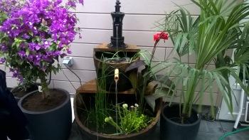 Fontaine avec poissons «koi» au jardin de thailande