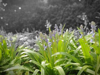 Ambiance fleurie au jardin