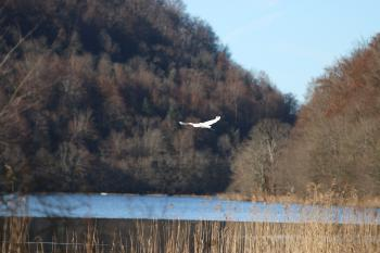Parc animalier du Hérisson vue Lac du Val