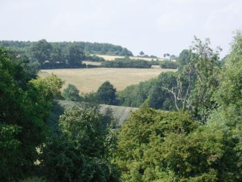 View from rear of property