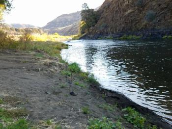 Looking up the John Day River
