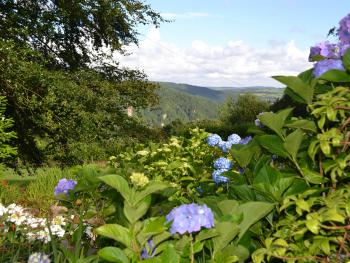 Banks of hydrangeas greet you as you arrive down the carriage drive in late Summer
