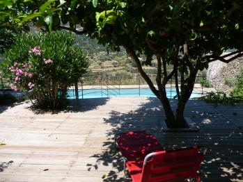 Sous les citronniers, vue sur la piscine