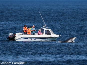 dolphins from Buckie RNLI 26/5/2017