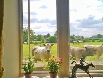 Battens Farm Cottages - B&B and Self-Catering Accommodation - Nosey neighbours!