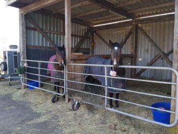 Außenboxen für Pferde