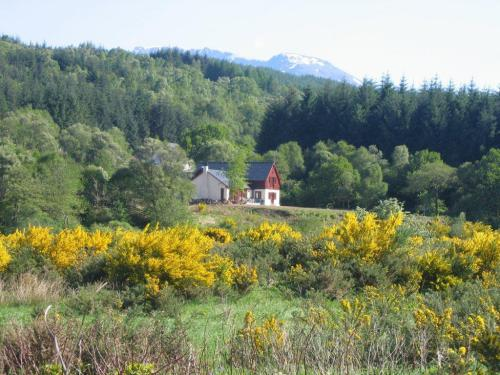 Garadh Buidhe (Yellow Garden) in the shadow of Ben Nevis
