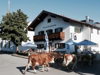 Unser Haus mit Kühen