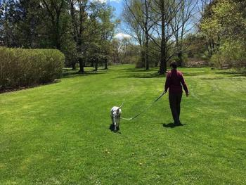 The Back Lawns - Perfect For Strolling