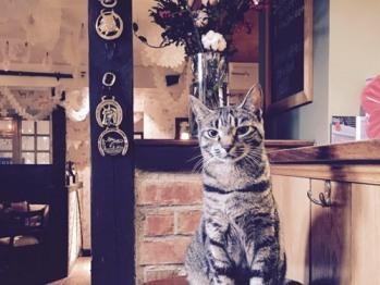 Bonnie the pub cat.