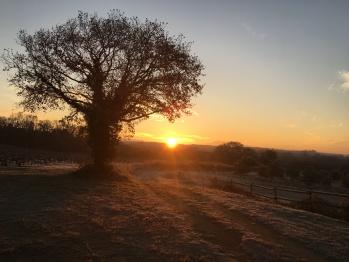 Levé de soleil au verger du Clos de la Tuilière