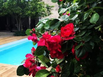 Les jolies fleurs du jardin et la piscine