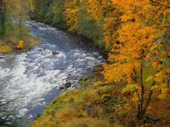 Fall Salmon river view