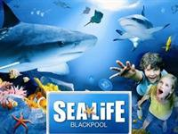 SEALIFE CENTRE BLACKPOOL -DIVE OF YOUR LIFE
