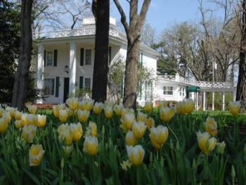 Mid May is tulip time at the inn.  Before the giant oaks bloom we have lots of sun, so we take advantage with tulip and daffodil beds thru the 3 acre property.