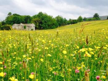 Summer meadows in Askrigg