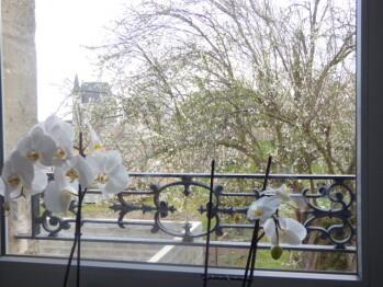 Vue de la fenêtre de la tisanerie