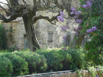 La Chapelle au milieu des oliviers et lavandes