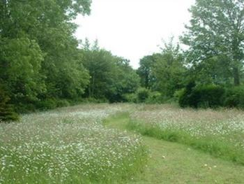 Natural meadow in full bloom