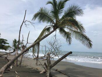 Beach in Cahuita National Park