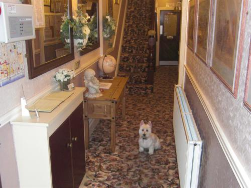 Our Little Westie .... Charlie .... Always available to Welcome Returning and New Friends to The Fairhaven