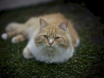 Notre chat DINO (La mascotte de la maison)