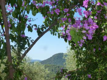 Paysage-bougainvillier