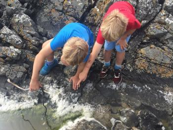 investigate the rock pools