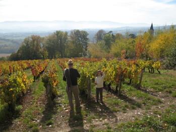 Découverte des vignobles - randonnées