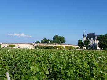 Promenade à vélo dans les vignes