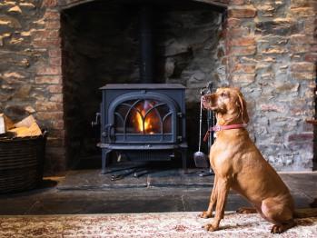 Tara by the fire