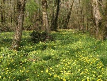 Forêt de la propriété (photo prise au printemps) où vous pourrez vous promener en toute quiétude