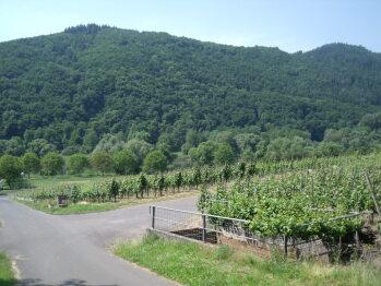 Blick aus den Weinbergen auf Mosel und Hochkessel