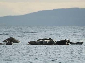 Seamill seals