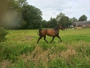 Pferdeweide vor Ort