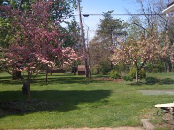Back yard at sprig time