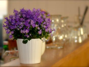 Flowers in the cafe