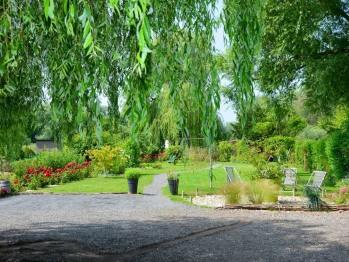 Cléome - Jardin