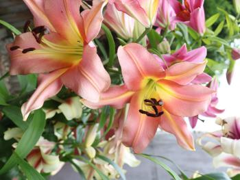 Lilies in July