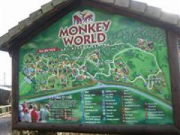 Monkey World at Wareham