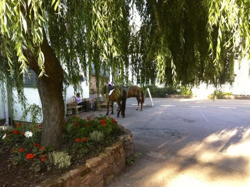Tie-up your horses under our Willow tree