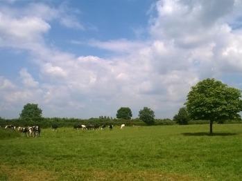Battens Farm
