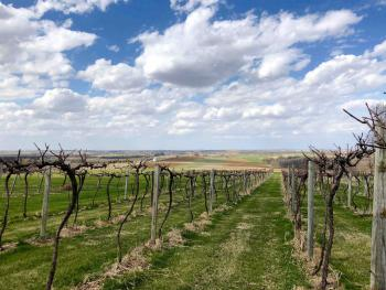 Early Spring at Galena Cellars Vineyard & Winery
