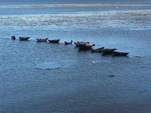 Seals at Peninver
