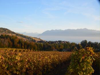 Le vignoble prend ses couleurs d'automne