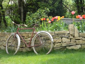 Face au chambre d'hôte vue du jardin pendant la floraison des tulipes