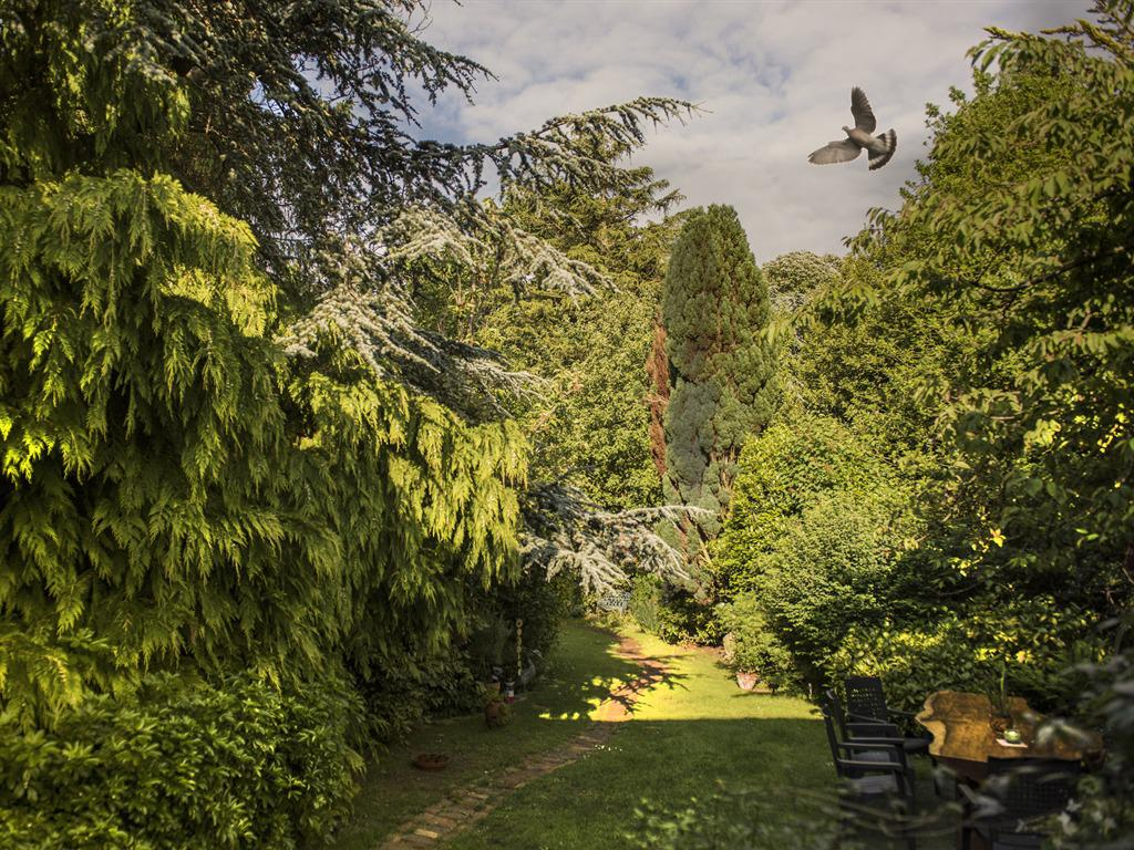 Garden leading to the Chalet & Northwood Park