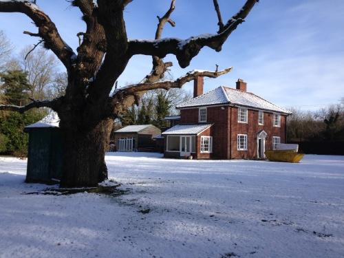 Ye Olde Oak at wintertime.