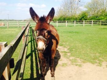 Sunny The Donkey